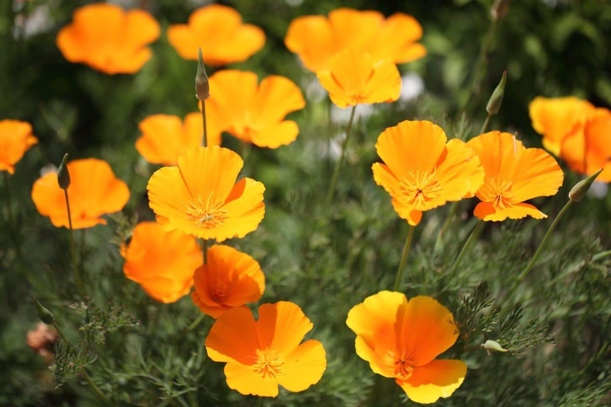 nature, field, summer, yellow flower, leaf, garden, herb, plant