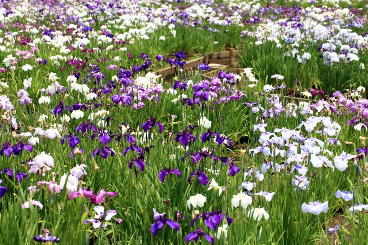 leaf, petal, summer, flower garden, nature, green grass, field