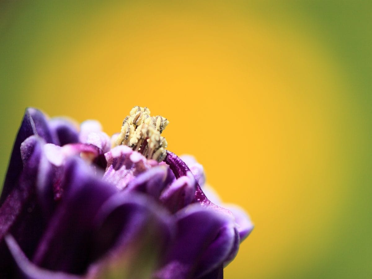 polen, pistilo, flor, jardín, naturaleza, verano, polen, sombra, planta