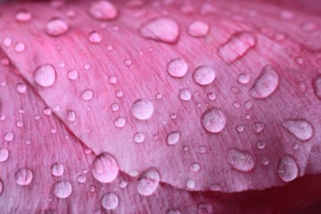 garden, flower, nature, rain, droplet, summer, petal, wet, dew