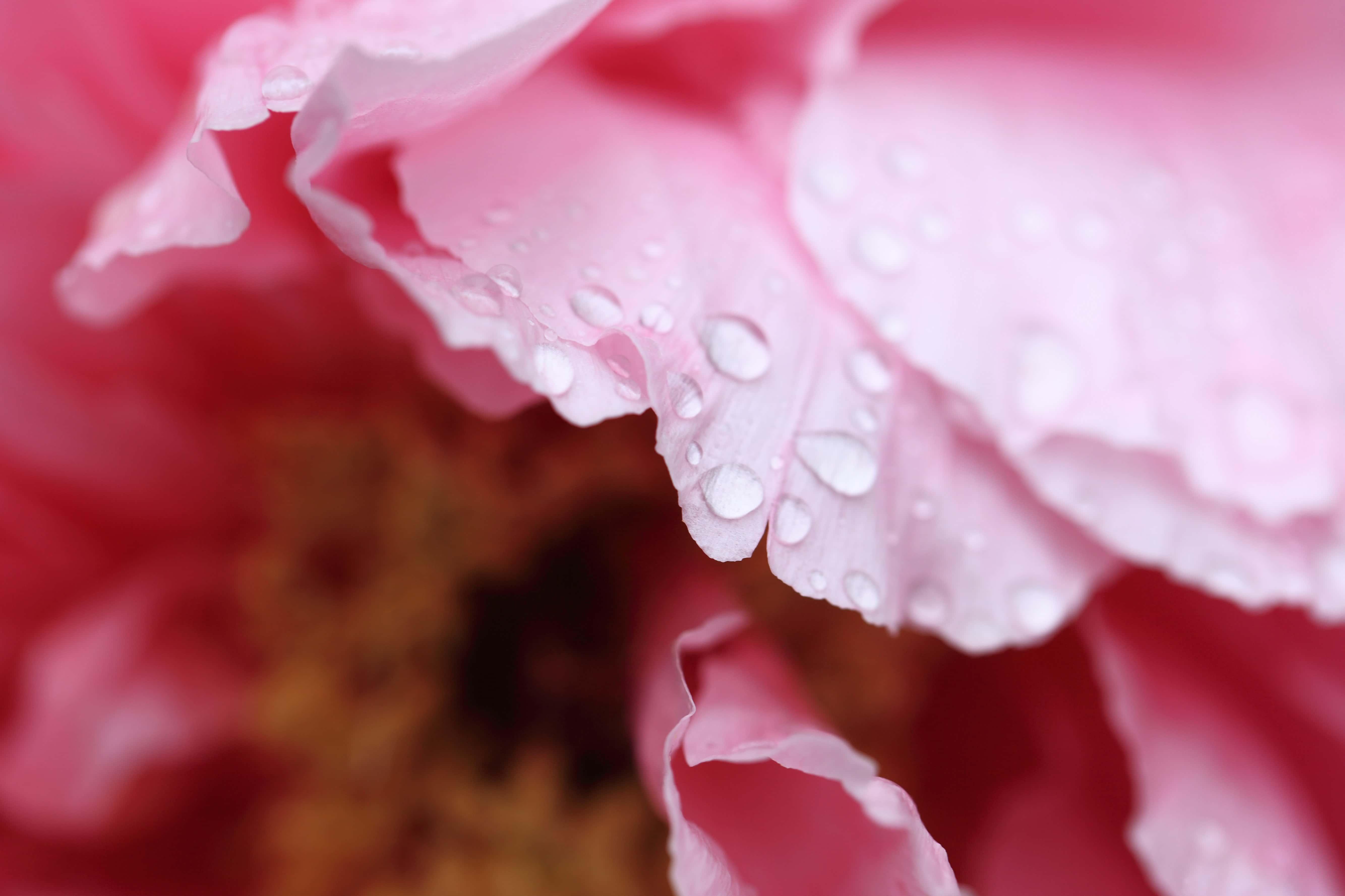 Download 610+ Wallpaper Bunga Embun Foto HD Gratid