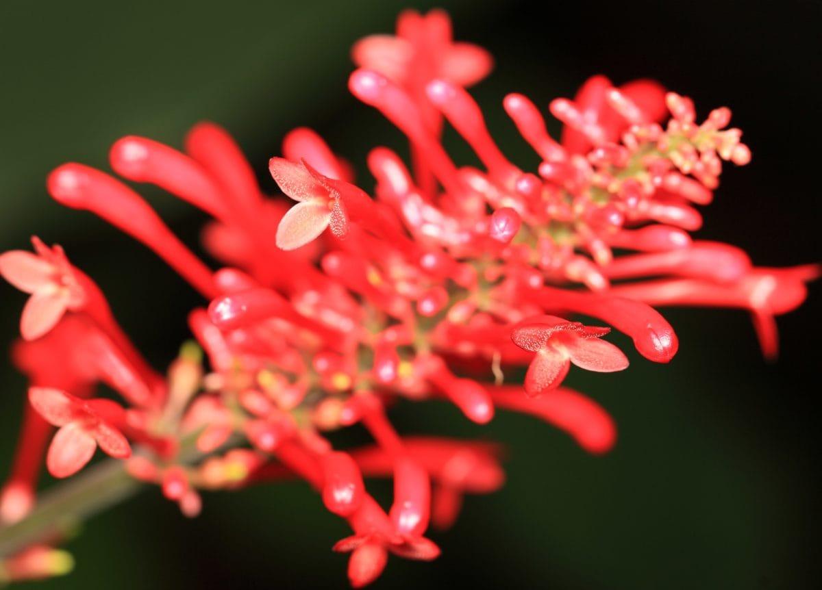 beautiful, nature, shadow, petal, red flower, garden, plant