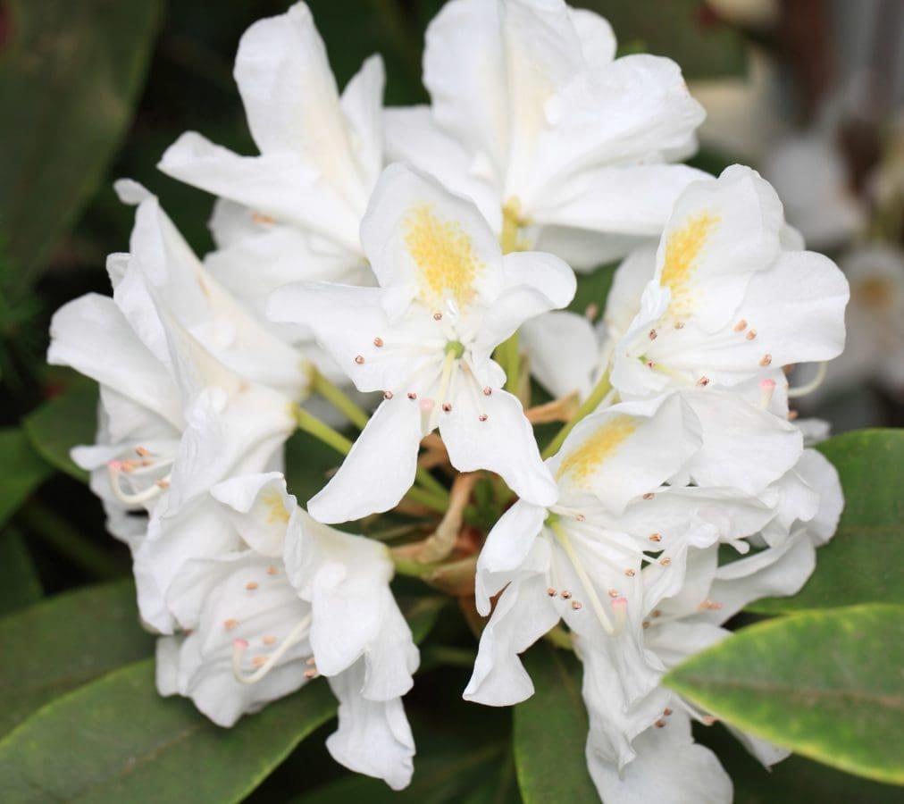 flower, petal, garden, nature, leaf, summer, beautiful, plant