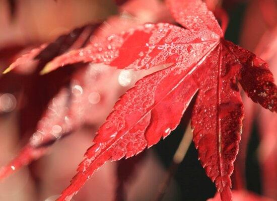 winter, dew, tree, rain, nature, red leaf, wet, garden
