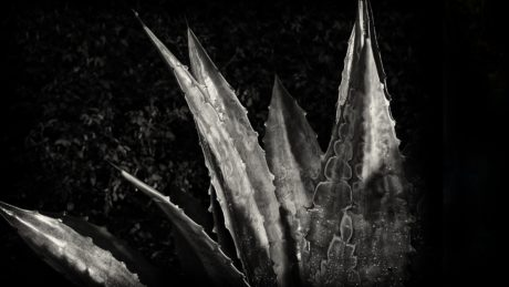 cactus, monochrome, photo studio, darkness, shadow, photography, agave, plant