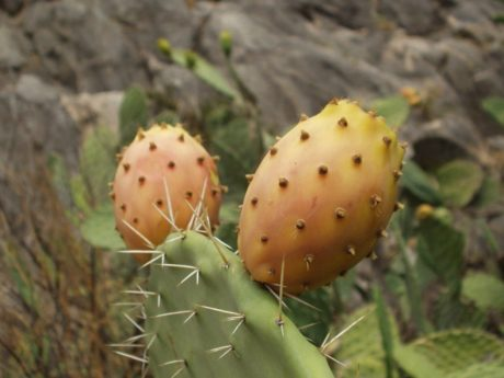 sharp, leaf, nature, desert, cactus, flower garden, plant, outdoor