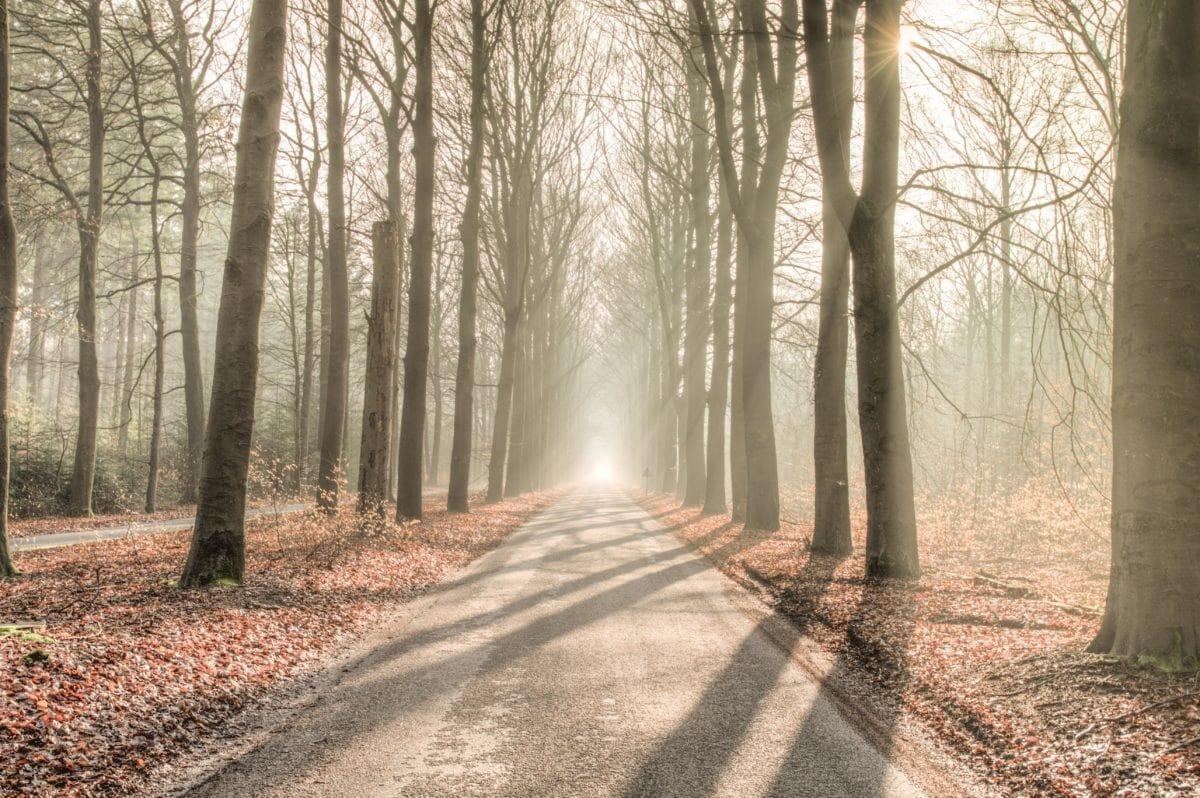 route forestière, ombre, soleil, arbre, brume, brouillard, bois, aube, nature, paysage, feuille