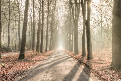 forest road, shadow, sunshine, tree, mist, fog, wood, dawn, nature, landscape, leaf