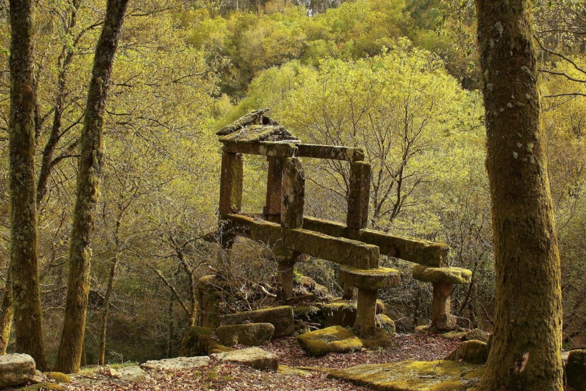 arbre, parc national, bois, nature, paysage, forêt