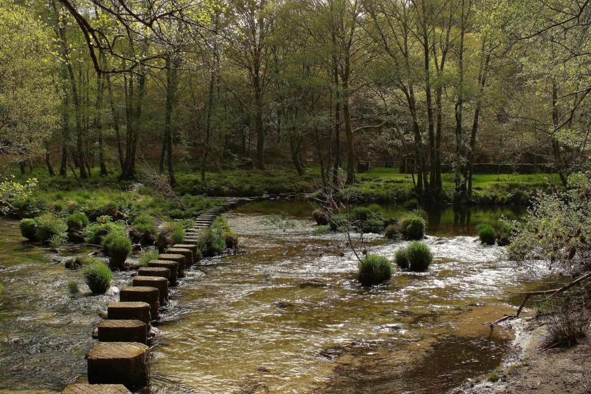 arbre, eau, fleuve, paysage, bois, nature, forêt, parc national