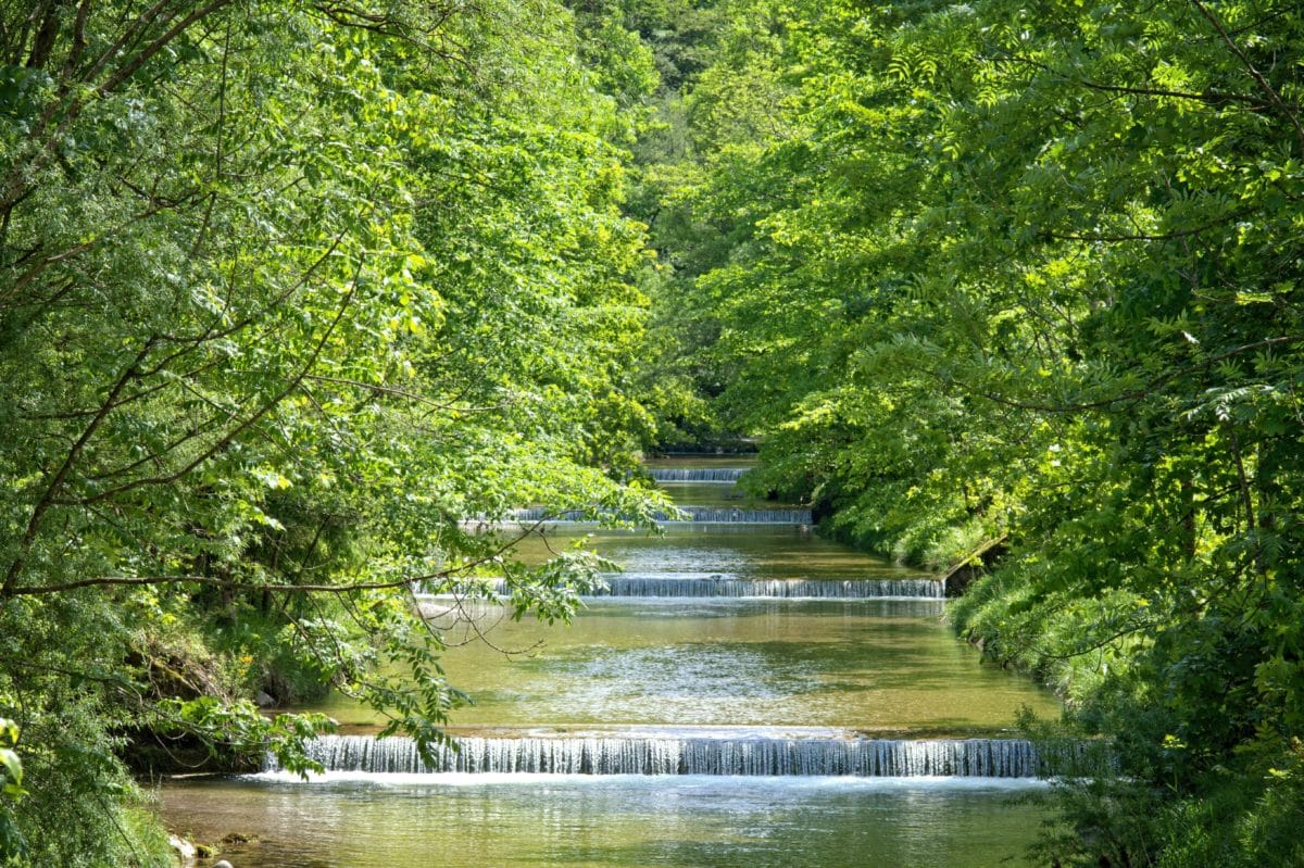 river, wood, summer, nature, water, leaf, tree, landscape