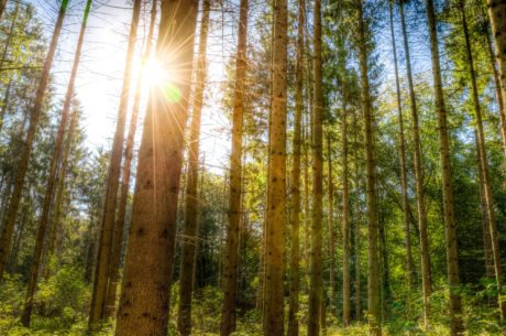 Les, podzim, krajina, svítání, slunce, dřevo, strom, příroda