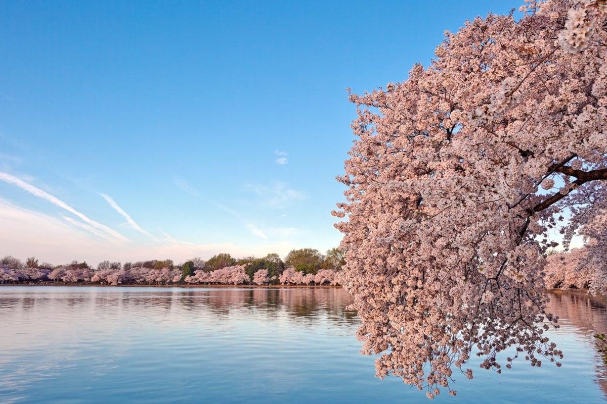 water, blue sky, basin, lake, landscape, outdoor, tree, branch