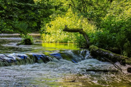 river, wood, landscape, nature, stream, leaf, tree, water