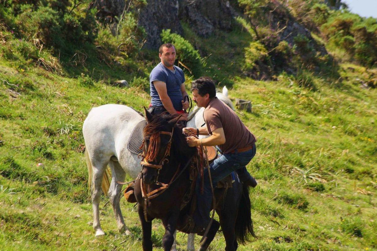 ljudi, čovjek, konj, kauboj, životinja, brdo, trava, pastuh.