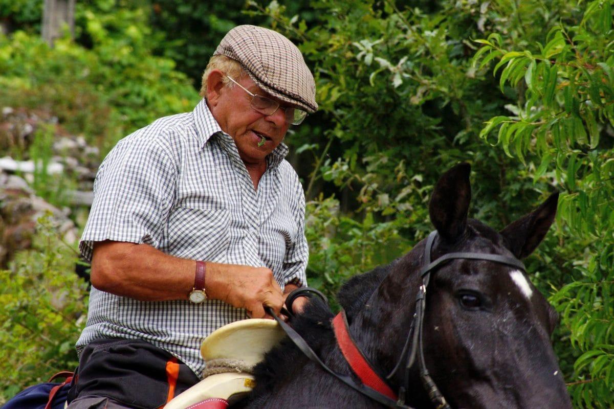 man, horse, harness, equine, animal, trainer, sport