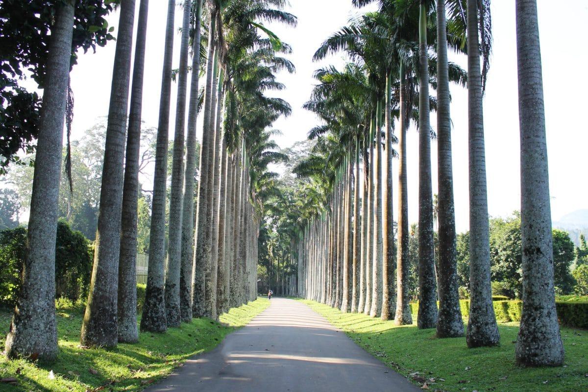 road, nature, wood, leaf, summer, tree, forest, landscape, grass