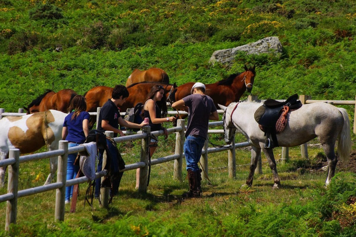 horse, cavalry, people,  animal, grass, ranch, outdoor