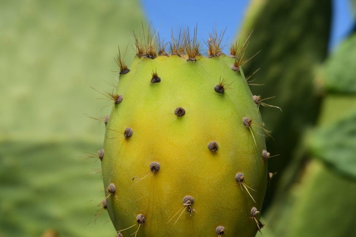 Saguaro, nature, cactus, extérieur, pointu, désert, sec, Spike