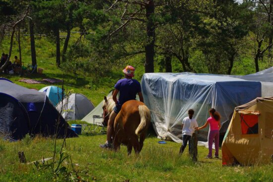 people, grass, tent, shelter, horse, tree, outdoor, event
