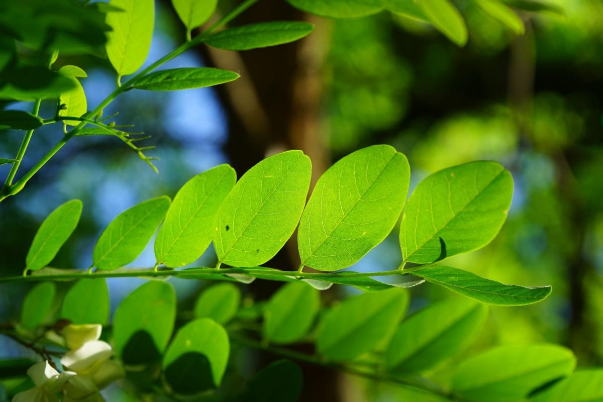 green leaf, nature, ecology, summer, plant, tree, branch, outdoor