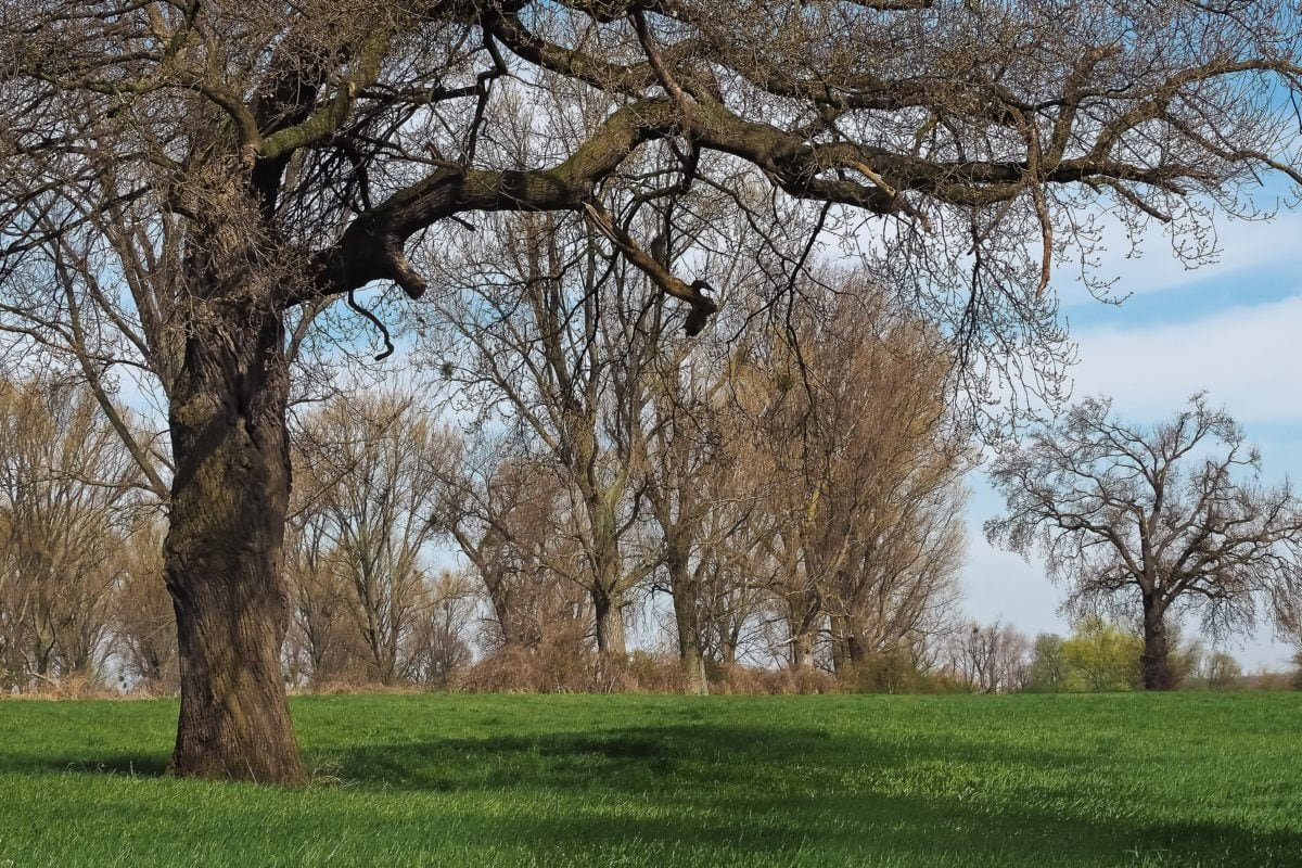 landskab, træ, natur, Branch, eg, træ, eng, skov, efterår, græs