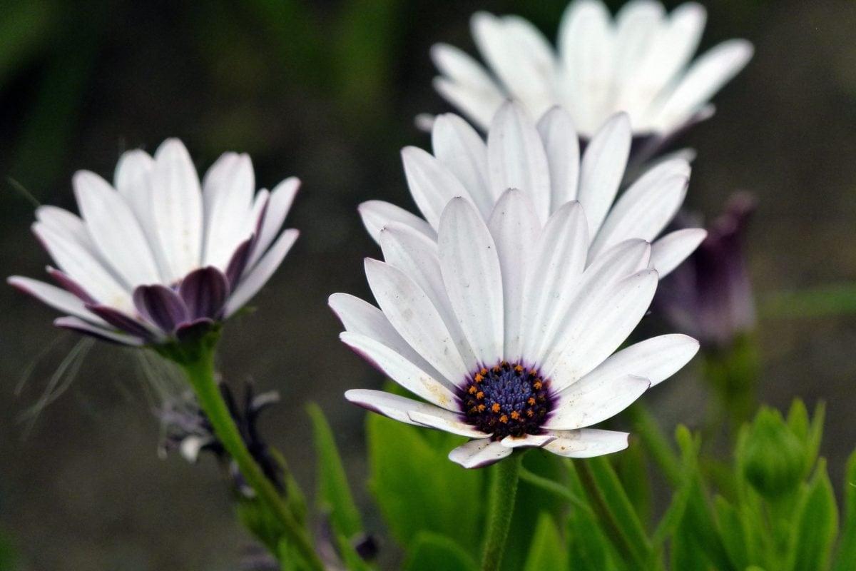 garden, green leaf, white flower, nature, summer, blossom, petal, meadow, plant