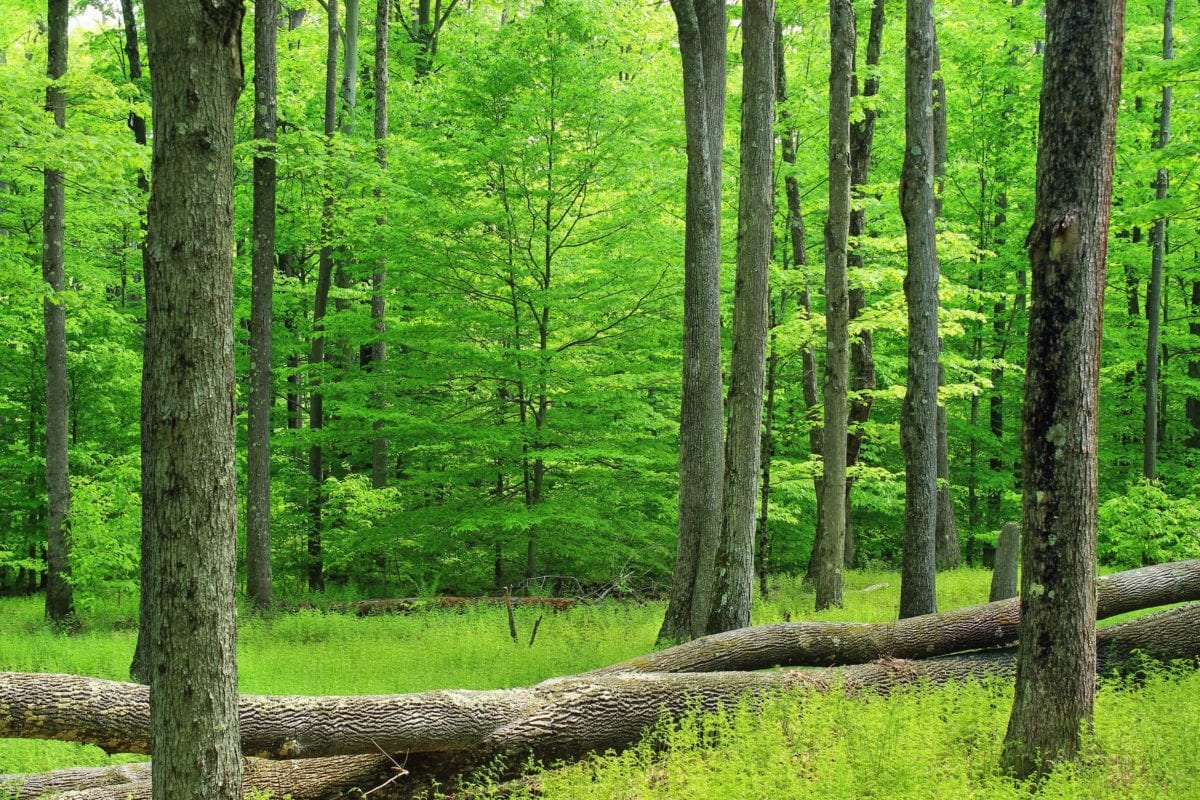 nature, wood, greenery, summer, leaf, tree, landscape, environment