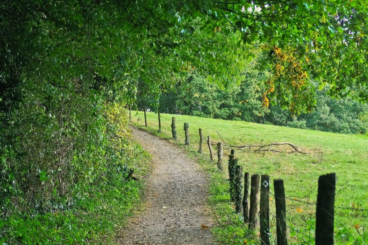 summer, landscape, nature, tree, wood, leaf, fence, forest
