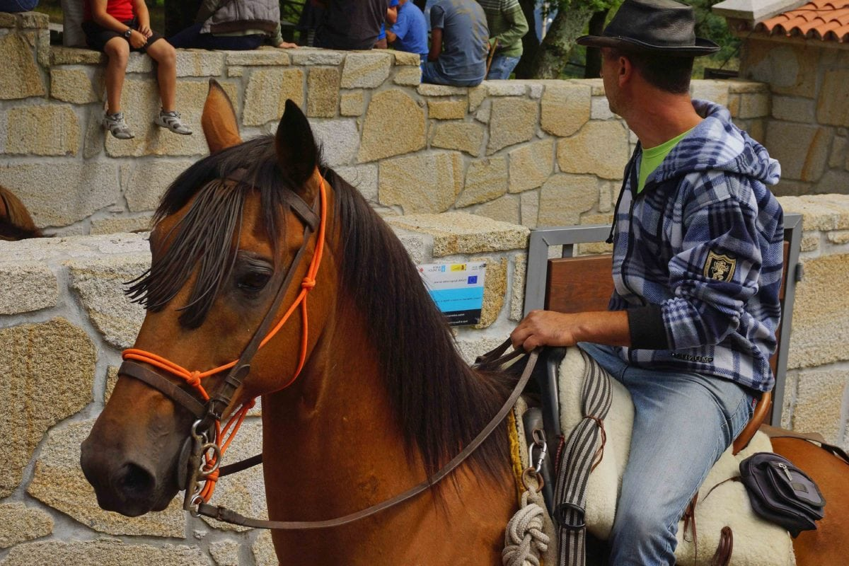 people, horse, event animal, cowboy, harness, bridle, stallion