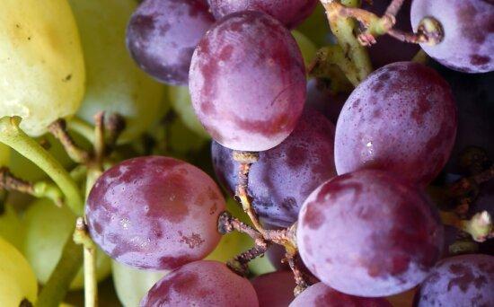 Natur, Nahrung, Blatt, Obst, blaue Trauben