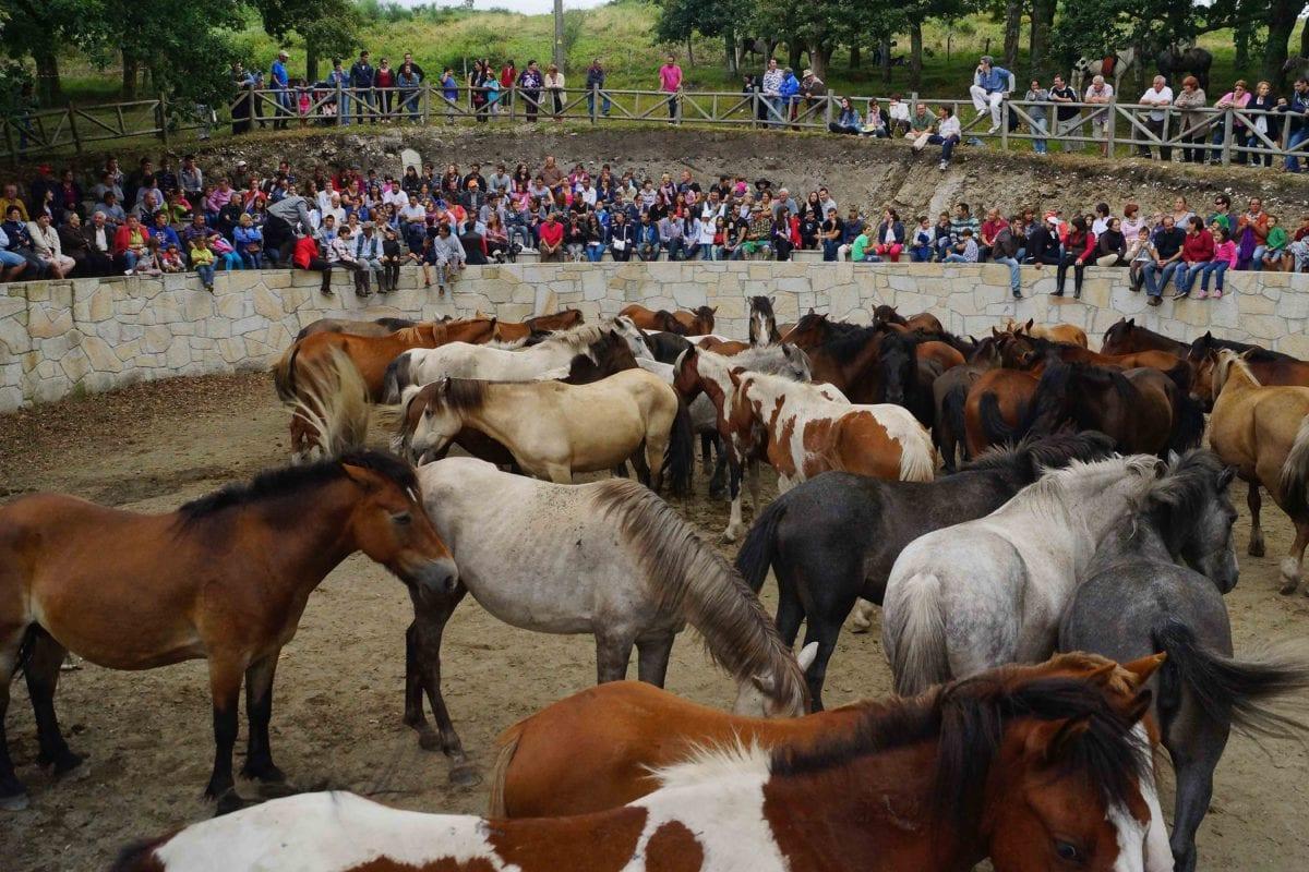 evento, folla, persone, bestiame, bestiame, Cavalleria, cavallo, animale
