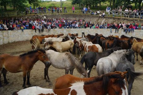 event, crowd, people, livestock, cattle, cavalry, horse, animal
