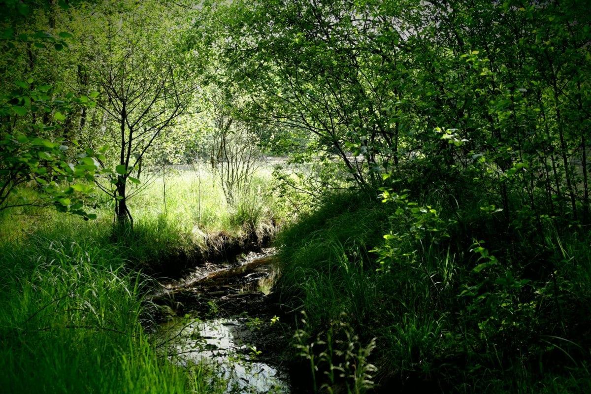 příroda, životní prostředí, strom, řeka, zelený list, krajina, dřevo, Les