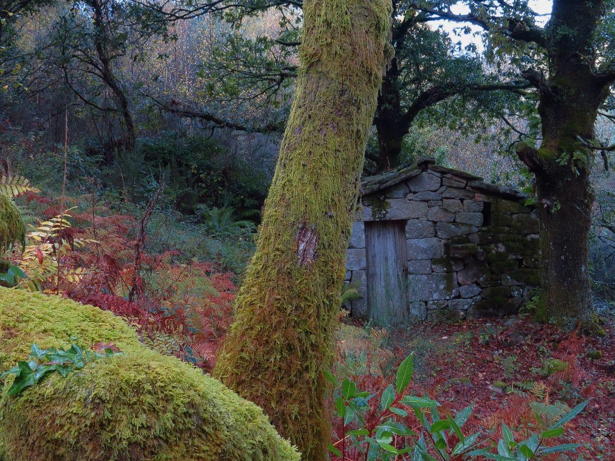 wood, tree, landscape, forest, autumn, plant, foliage, outdoor