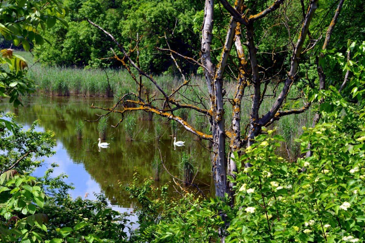 landschap, zomer, water, blad, natuur, boom, hout, bos