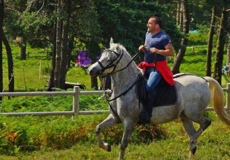 Süvari, at, spor, üzengi, hayvan, ağaç, çim, açık