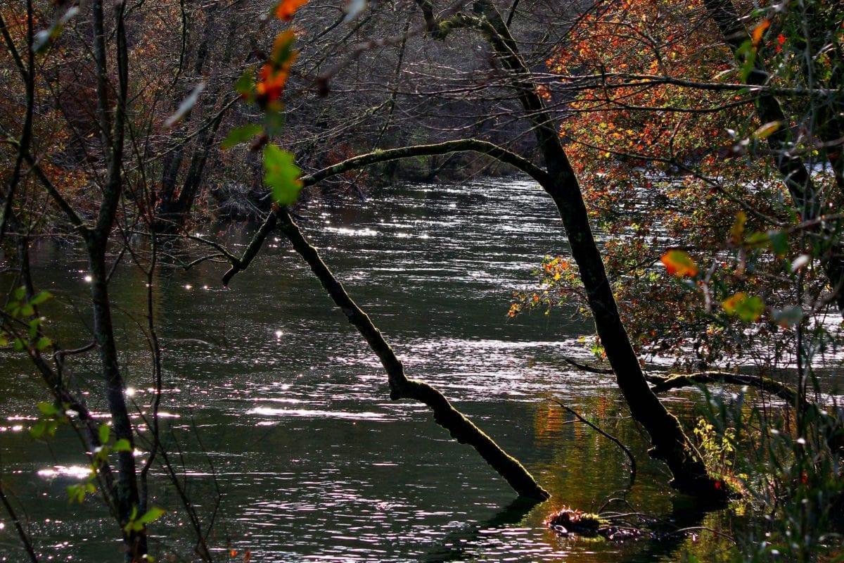 natur, avdeling, elv, landskap, tre, tre, vann, høst