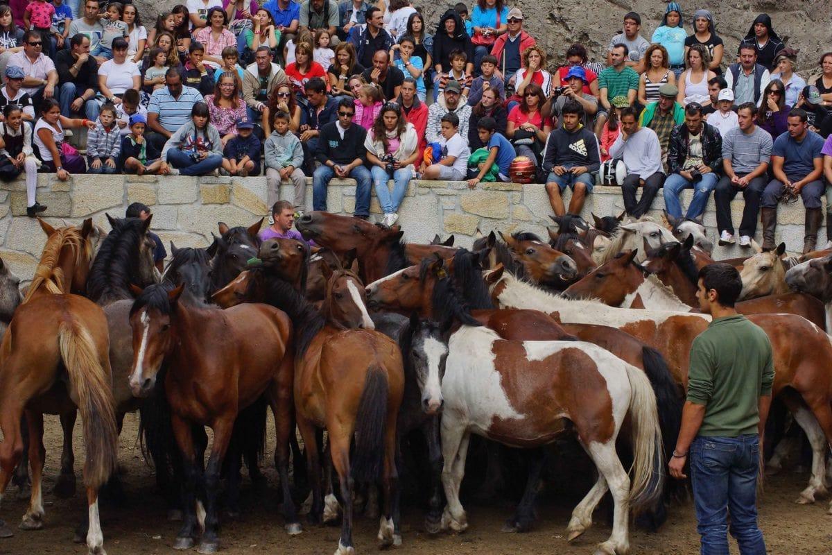 Konjica, ljudi, konj, kauboj, životinja, ranč, osoba, Ground
