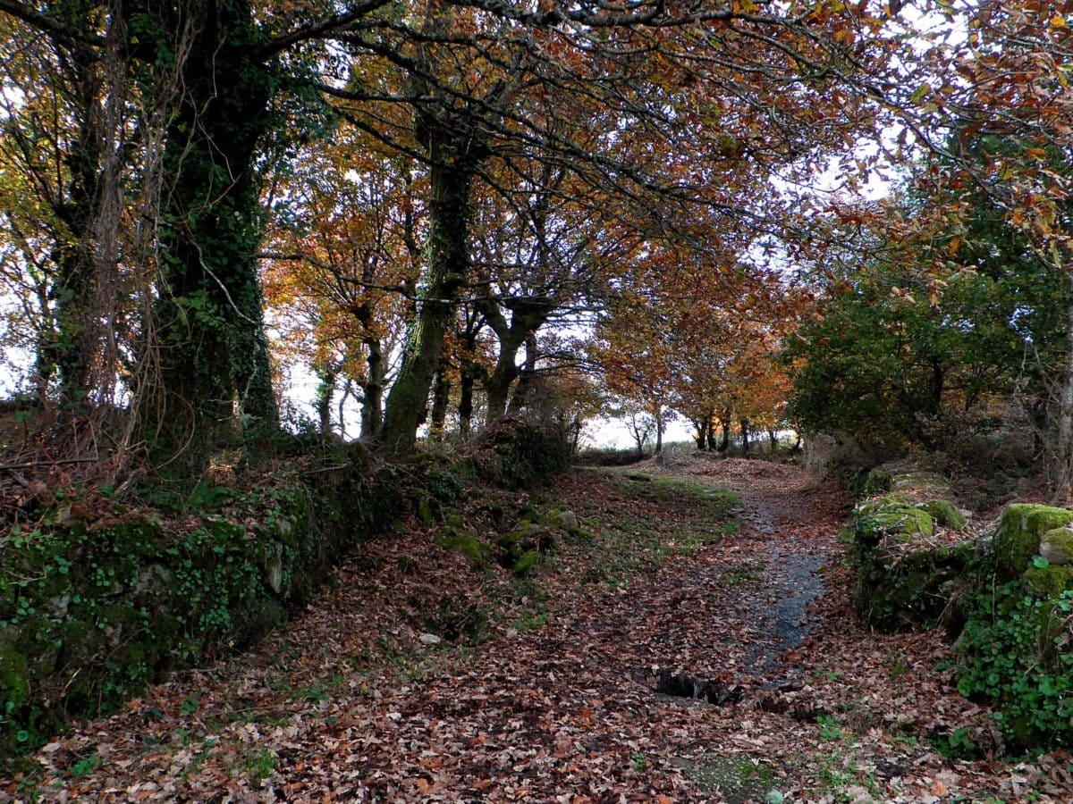 landscape, wood, leaf, tree, nature, garden, forest, autumn