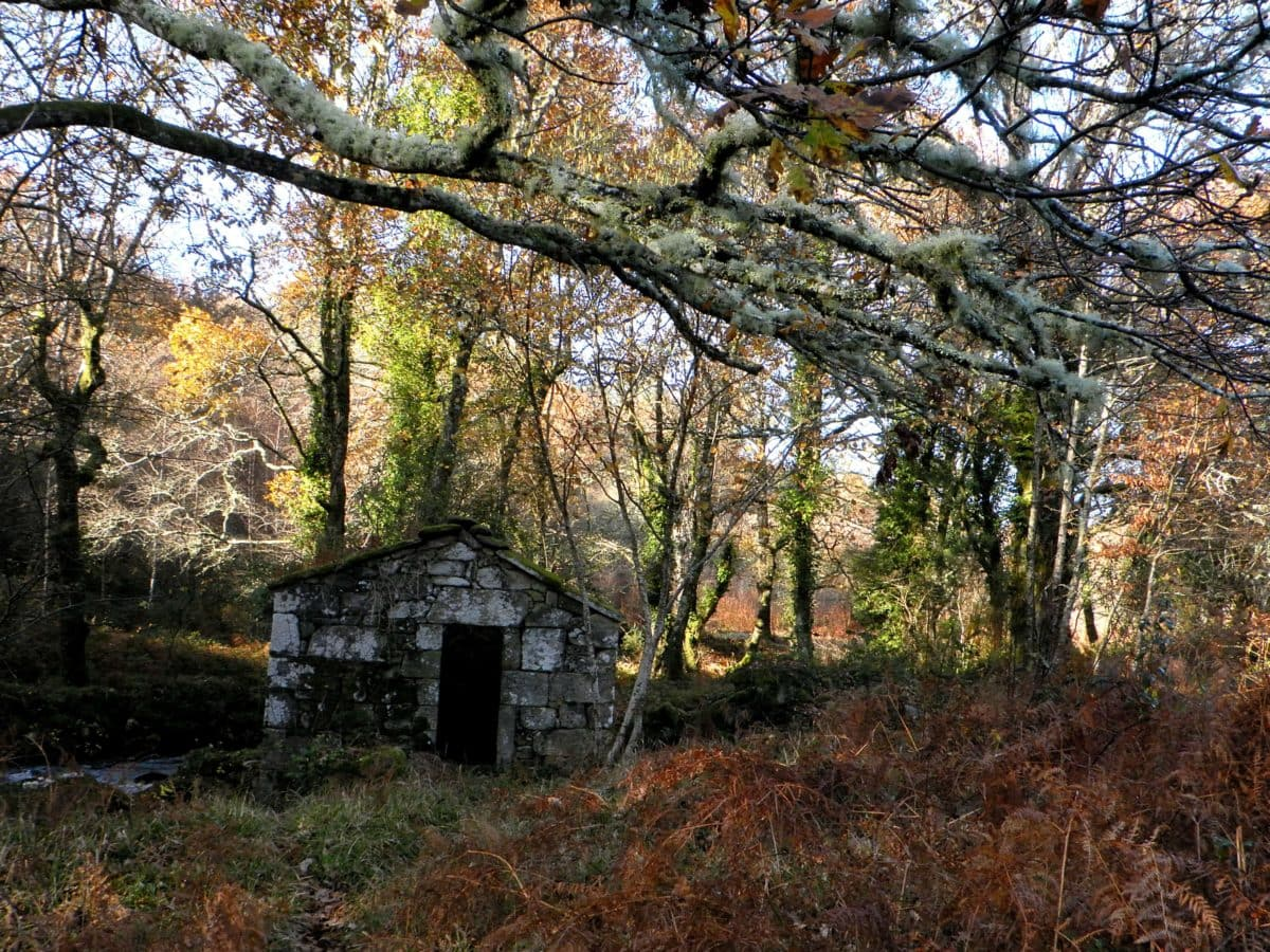 wood, nature, tree, landscape, barn, structure, forest, grass