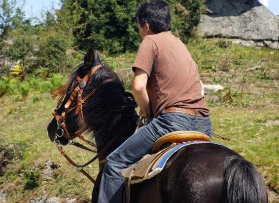 om, cavalerie, femeie, cal maro, cowboy, animal, în aer liber