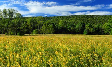 kenttä, kesä, maaseutu, maisema, maatalous, luonto, sininen taivas, maa