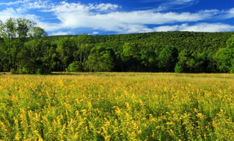 teren, vara, rurala, peisaj, agricultura, natura, cerul albastru, Teren