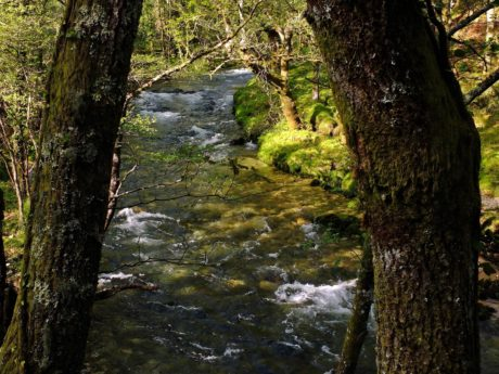 wood, river, water, tree, leaf, nature, moss, shadow, landscape, forest