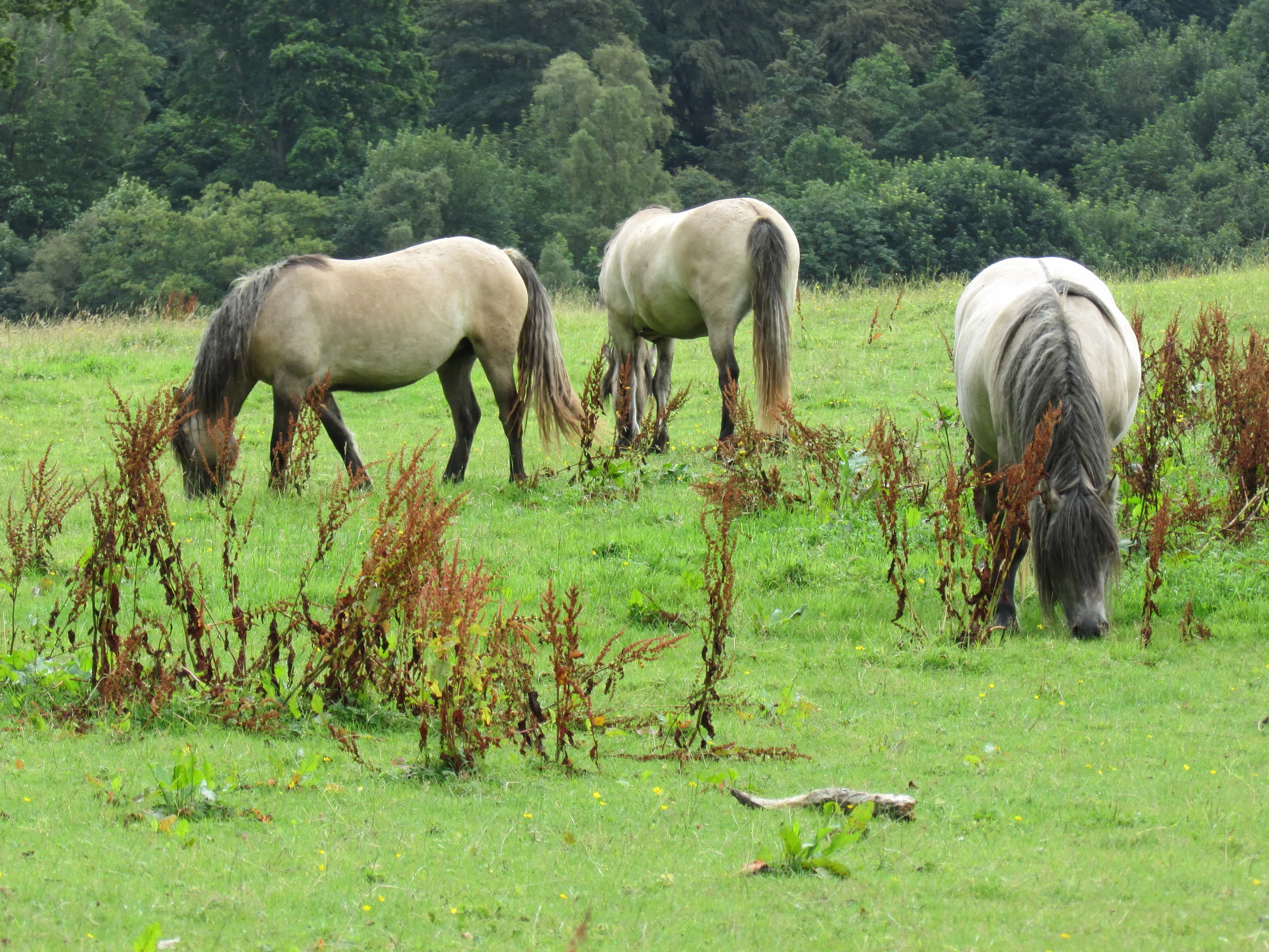Gambar Gratis Hewan Bidang Pertanian Kuda Kuda Peternakan