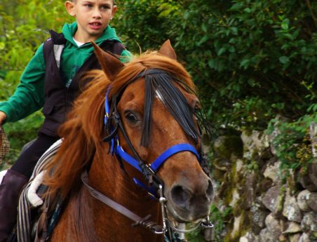 brown horse, cavalry, animal, boy, stallion, equine, outdoor, ranch