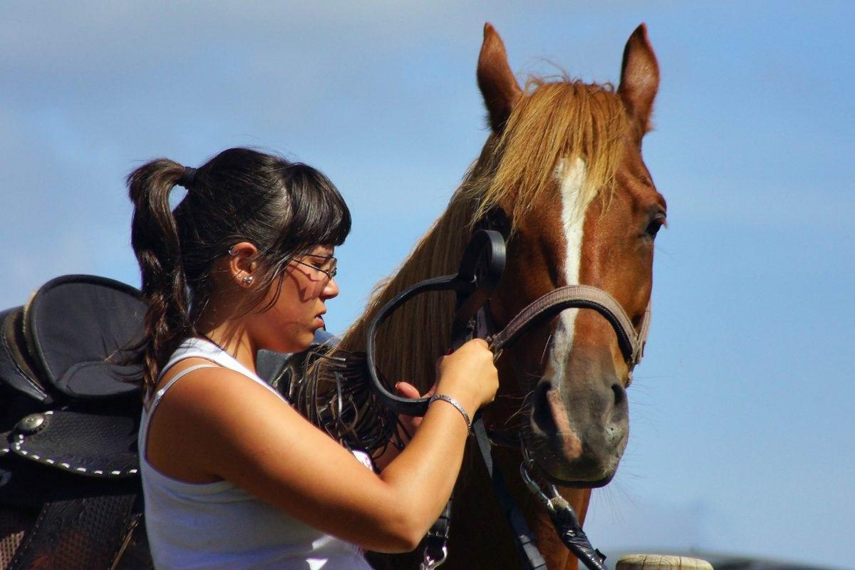 mujer, muchacha bonita, competición, Caballería, caballo marrón, animal, semental