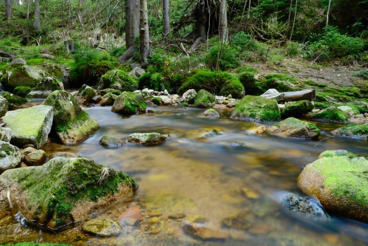 water, nature, forest, riverbank, stream, waterfall, creek, moss, wood