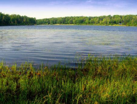 blå himmel, natur, landskab, refleksion, sø, grønt græs, vand, skov
